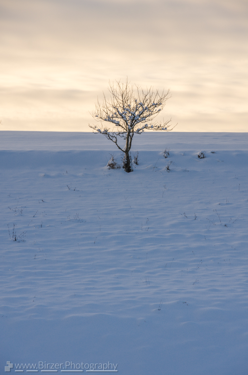 Winter landscape with tree in sunset