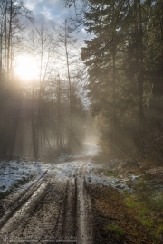 Forest road with sun shining through the fog