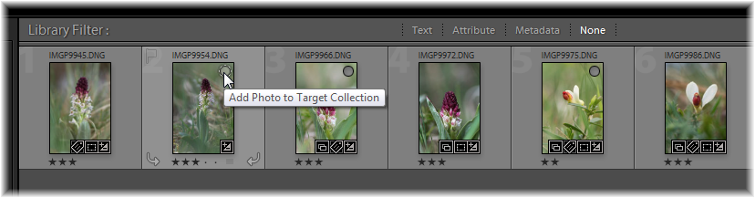Lightroom target collection 2